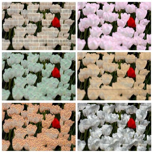 Tulpen – Venster
