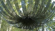 Kunst in Natuurpark